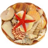 Shell Basket 6 Inch Dia