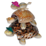 Shell Trio Large Tigris Turtle / Col Hat
