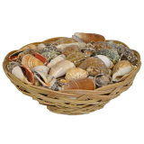 Keyring Shell In Basket 100pc