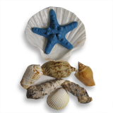 Shells Pack With Header Card