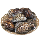Shell 20 Cowrie Shells In Basket